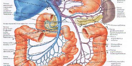 La osteopatía visceral