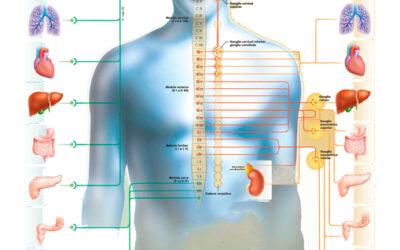 ¿Sabes que muchos dolores articulares y contracturas tienen un origen visceral?