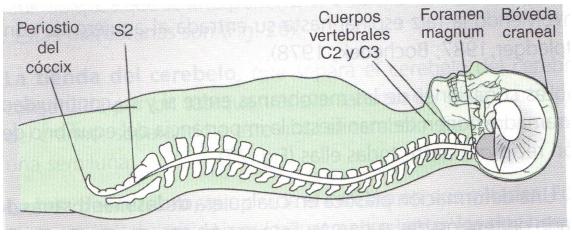 SISTEMA CRANEO-SACRO y OSTEOPATÍA CRANEAL